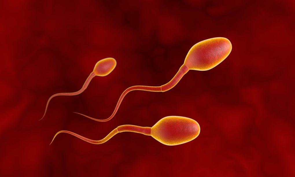 Sperm motility is adversely affected by heavy cannabis use