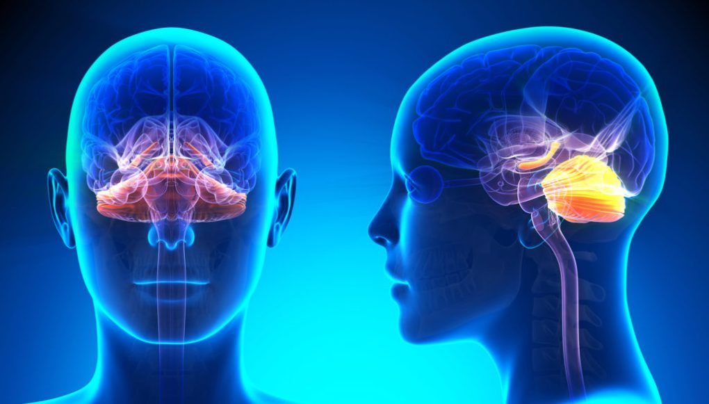 CB1-receptors are concentrated in the cerebellum and hippocampus, which are also associated with ASDs