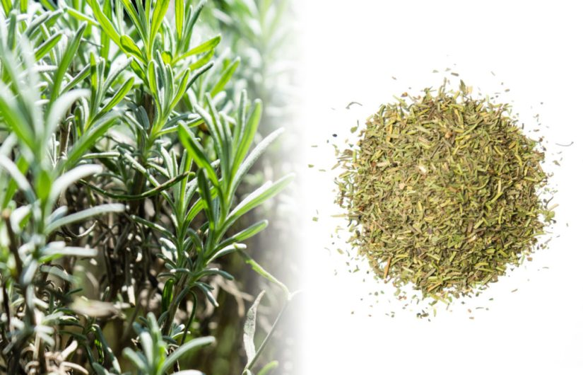 A close up photograph of a rosemary bush. It features green needle-like leaves clustered tightly together. Besides the fresh plant is a photograph of a dried lavender mixture of brown and green on a white surface.