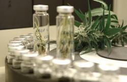 GW Pharma is het eerste bedrijf dat een cannabismedicijn op de markt heeft kunnen brengen en het eerste bedrijf dat toestemming kreeg van het ministerie van Binnenlandse Zaken van Groot-Brittannië om medicinale cannabis te verbouwen.