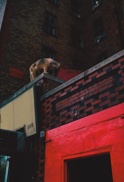 Roof Dog, Ave. B, E. 4th & E. 5th St., 1981, photograph by Philip Pocock