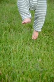 Hypersensitive baby pulling feet away from grass