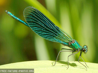 Dragonfly Life Cycle - Learning About Life Cycles