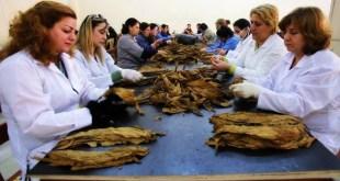 مؤسسة-التبغ-توزع-72-مليون-ليرة-أرباح-على-العمال