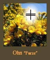 furze spiritual meaning