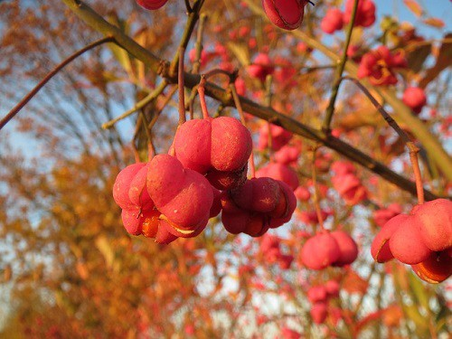 Spindle Spiritual Meaning