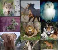 Animal spirit guide meditation