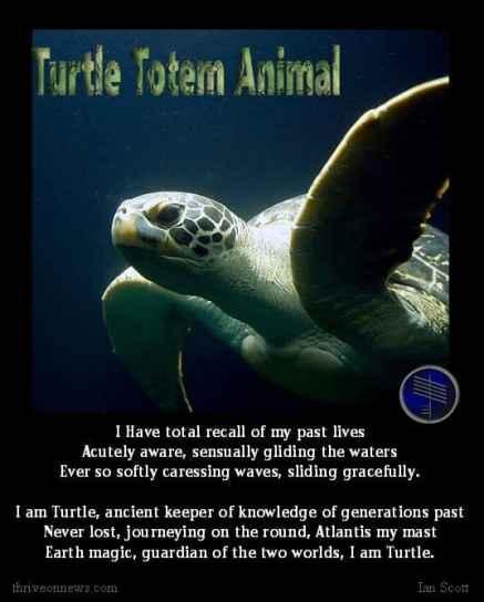 spirit guide turtle