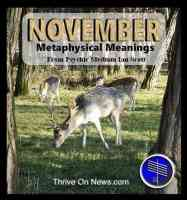 November symbols and meanings