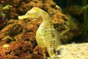 seahorse totem animal