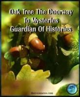 oak tree spiritual meaning