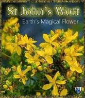 st john's wort spiritual meaning