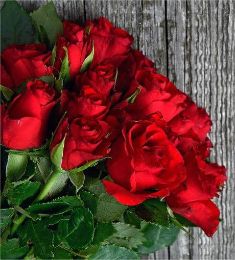 red rose meaning and symbolism