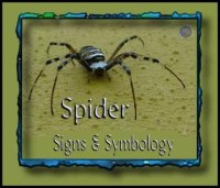 spider spiritual meaning