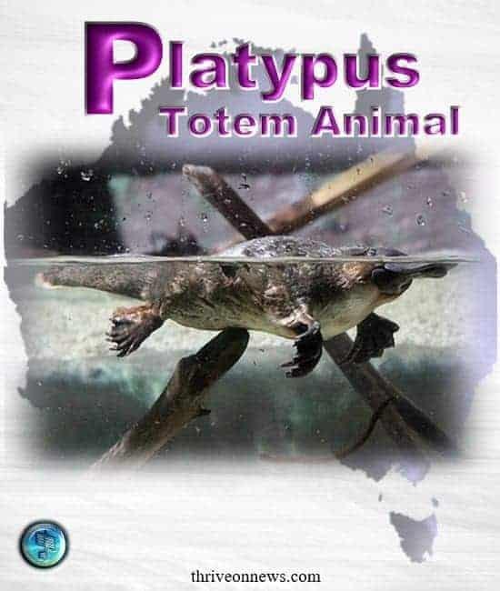 platypus spiritual meaning