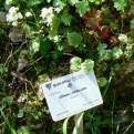 Nel giardino botanico con le specie delle Apuane