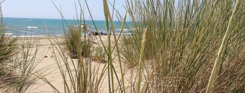 Le dune e le loro piante pioniere