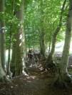 Sentiero dal Puntato