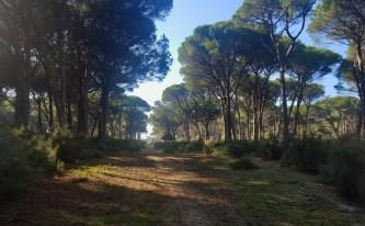 I sentieri tagliano le dune a San Rossore