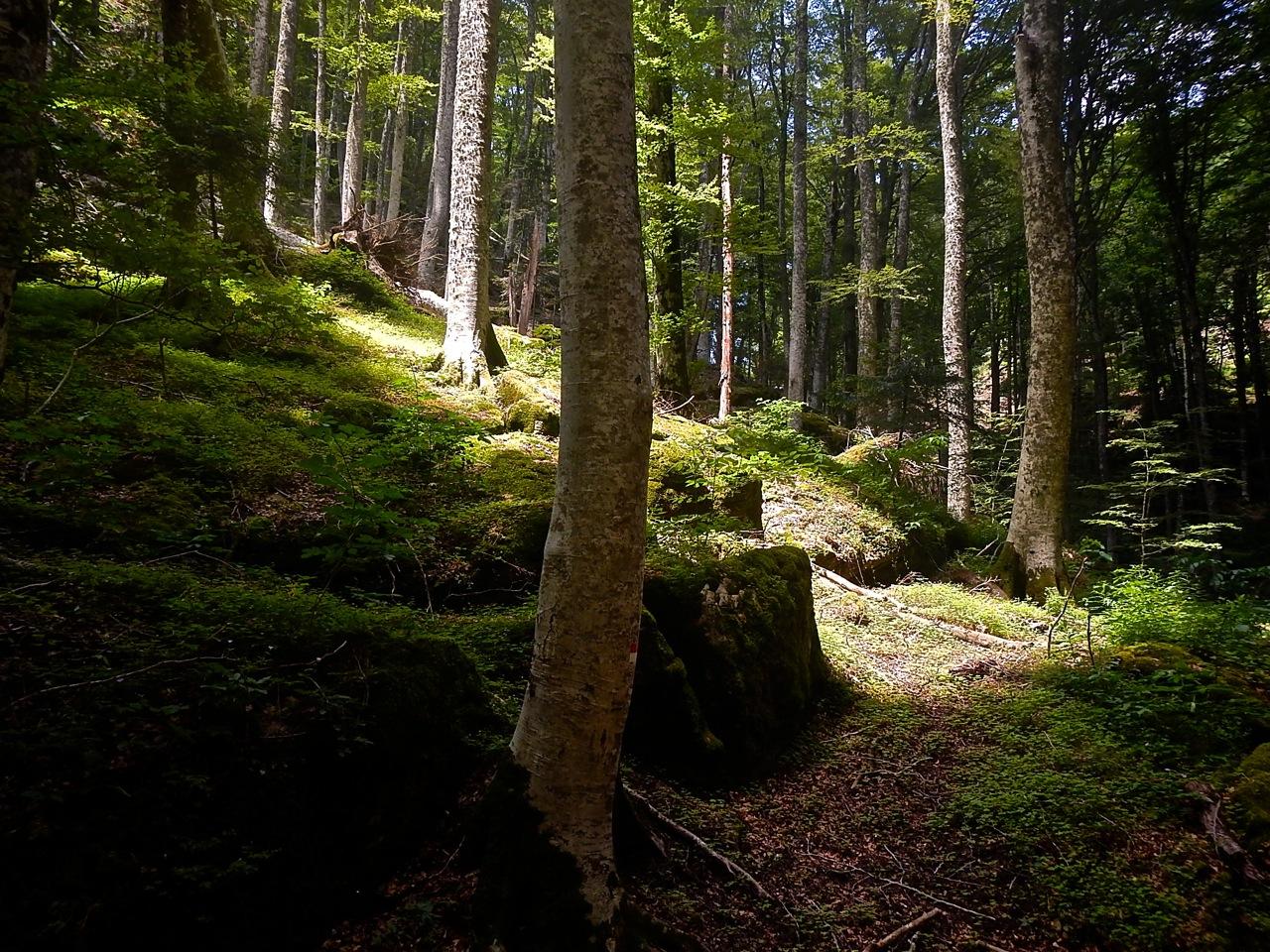 Il bosco delle fate e le mille storie del Santuario della Verna