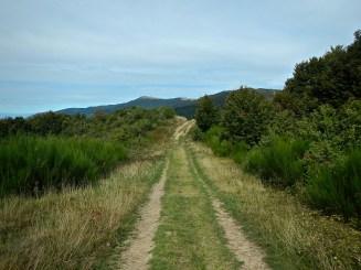 il sentiero 00 si avvia verso il crinale