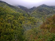 Nelle foreste intorno Rocca Ricciarda inizia l'autunno