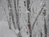 Il rosso dei segnavia è ben evidente quando c'è neve e ghiaccio