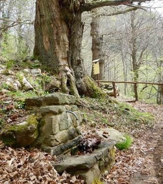 Una vecchia fonte vicino al luogo del picnic