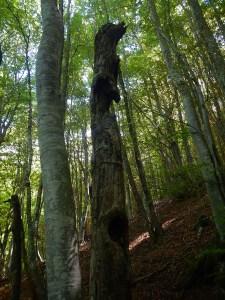 I misteri intorno al Lago iniziano da questo albero con il naso