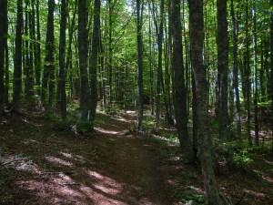 Le foreste intorno al Lago degli Idoli