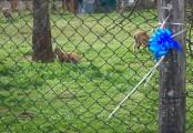 Cucciolo di stambecco nel parco di Poppi