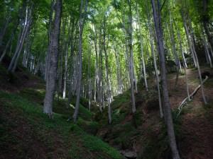 In primavera la foresta di Camaldoli brilla come uno smeraldo