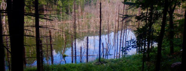 Il lago di Poggio Baldi e il Bidente a Corniolo