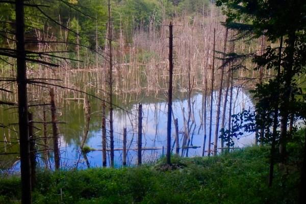 Il Sentiero Natura del lago di Corniolo, in Appenino Romagnolo