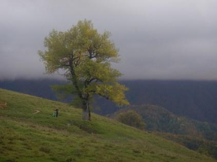 La sera scende sul bivacco e un grosso cerro s staglia sulle nuvole che coprono la foresta di Sasso Fratino