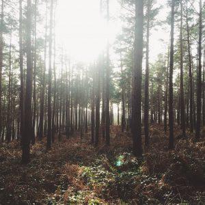 Trail de l'ourthe 2015