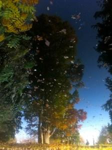 reflet-de-larbre