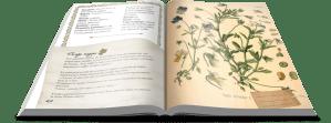 L'herbier des sorcières de Hagel ©Editions Danaé