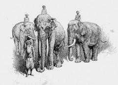 kipling, il libro della jungla, toomai degli elefanti