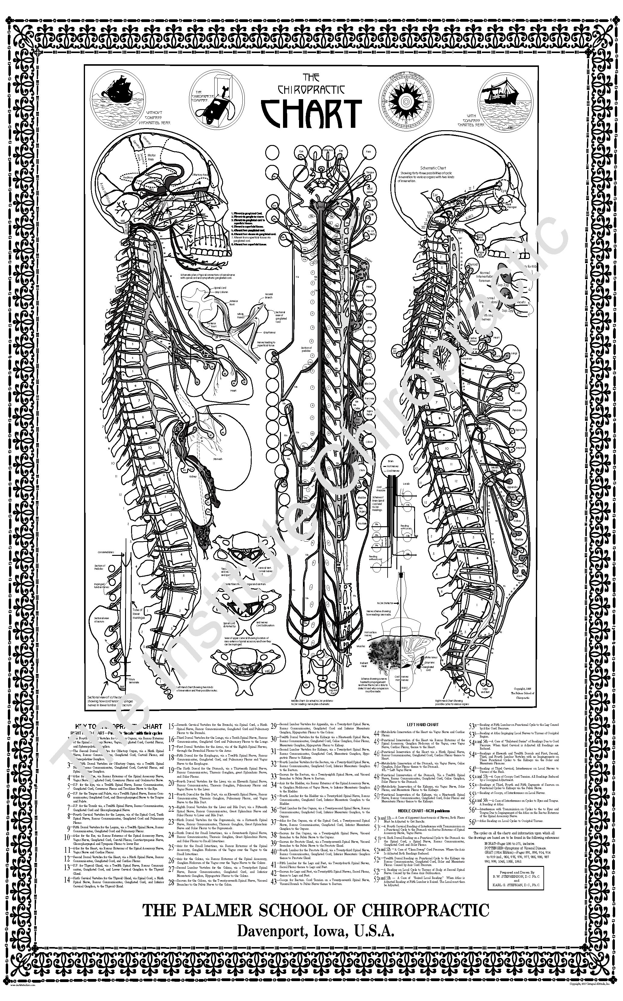 Stephenson S Chiropractic Chart 24 By 36