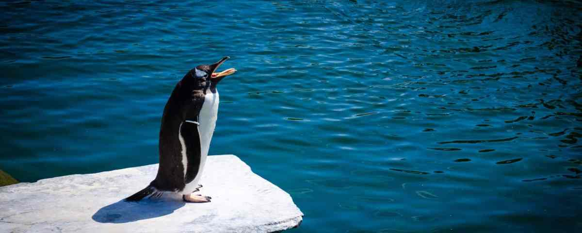 Google Penguin: 5 Recovery Facts You Need to Know