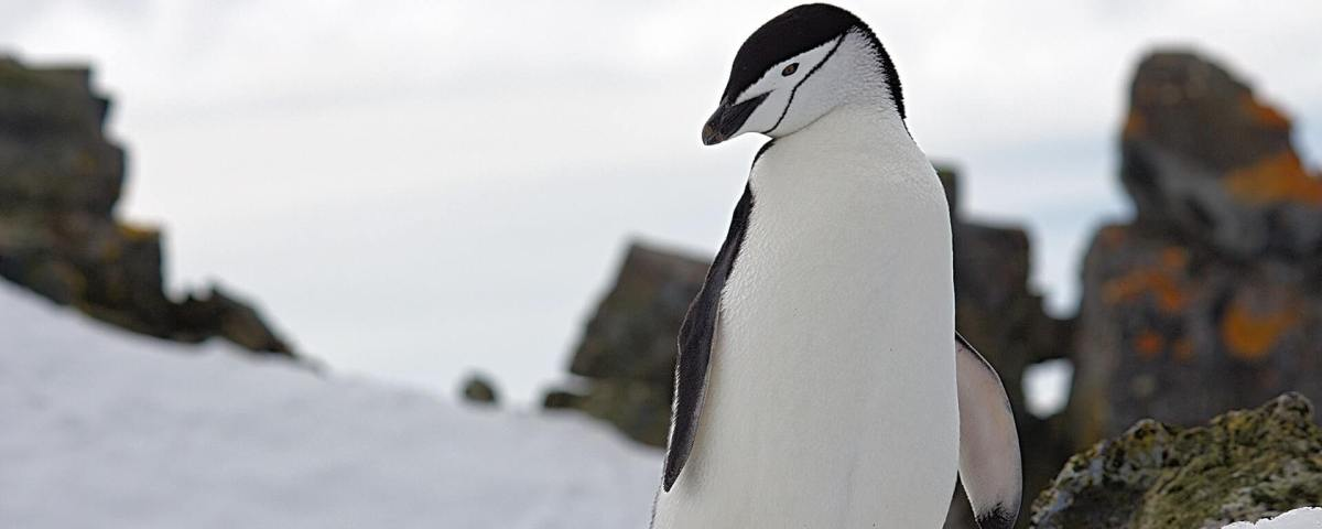 When Is the Next Google Penguin Update Going to Hit?