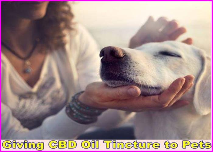 Giving CBD Oil Tincture to Pets