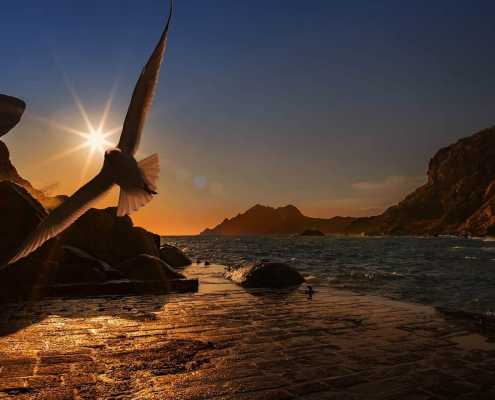 seaside bird flying