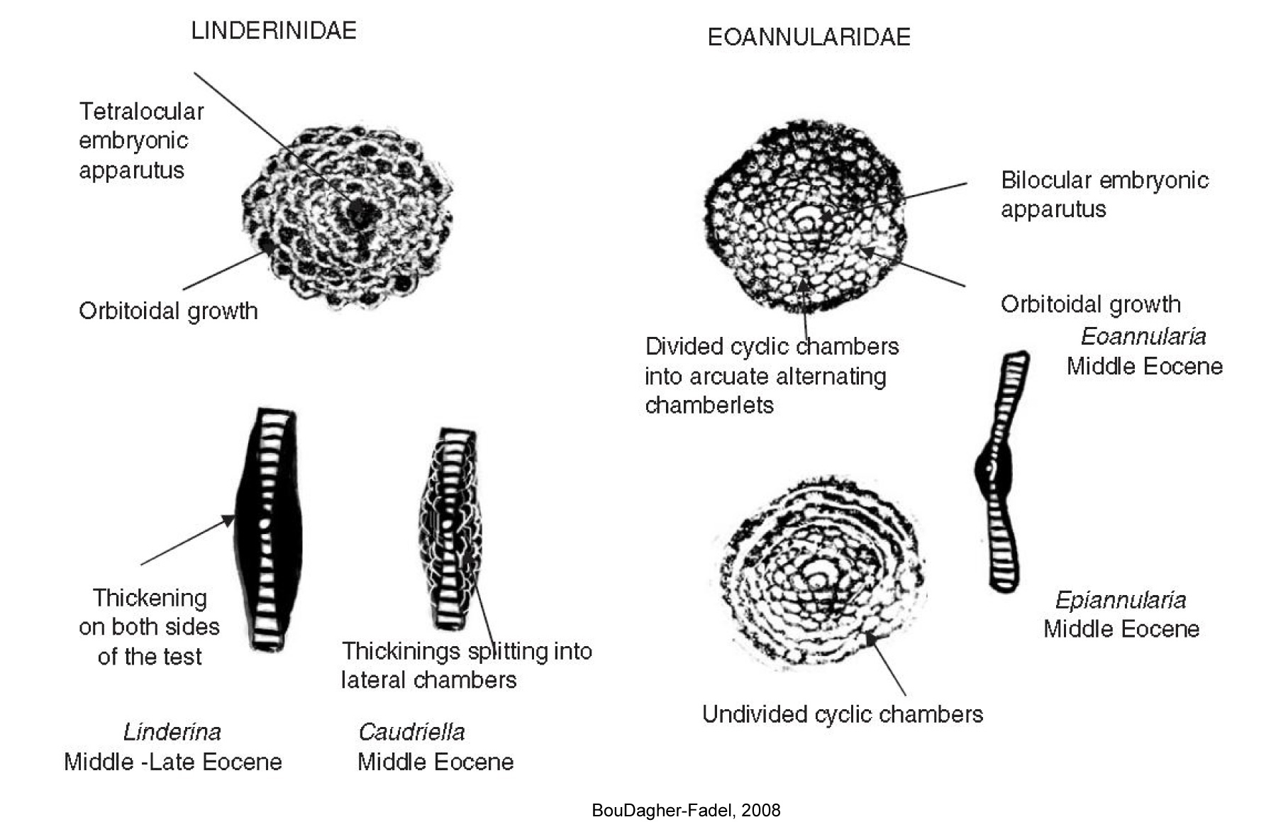 The Paleogene Forams