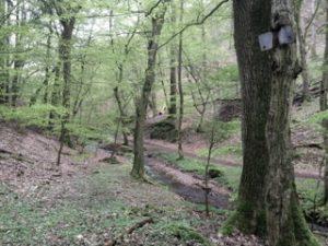 Donnersberg Pfalz
