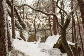 Winterwandern Pfalz Kalmit