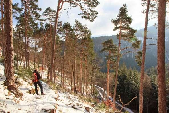Winterwandern_Pfalz_Kalmit_6