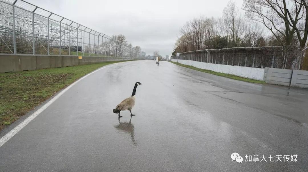多掏5100万!蒙特利尔F1大奖赛再次取消