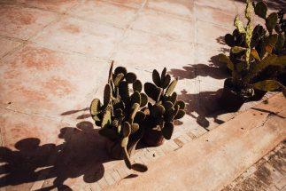 dar-zemora-hotel-marrakech-juarezcarr-0030